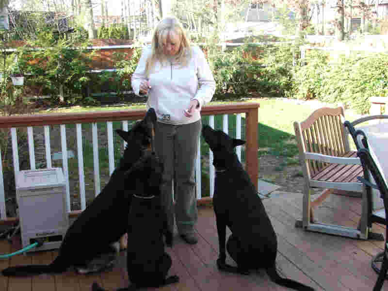 Toms River Pet Sitting Service / Loving Touch Pet Siters